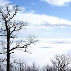 Blue Ridge View by Roxygirl