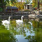 Swans Lake. by Vitta