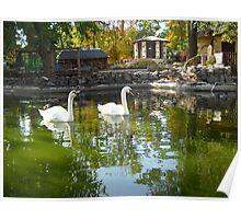 Swans Lake. Poster