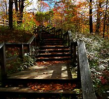 Autumn Steps by Marcia Rubin