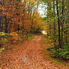 Dirt Roads and Autumn colors by Ruth Lambert