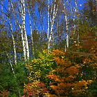 Birch Trees in Fall..........A beavers delight... by Larry Llewellyn