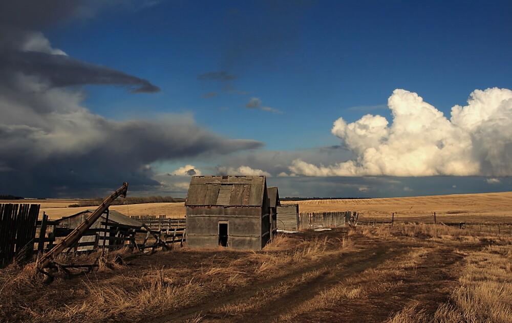 Wild Alberta Skies by Michael Collier