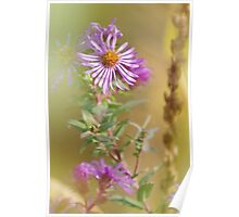 Purple Aster Poster
