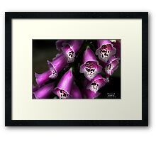 """Chocolate Sprinkles"" Framed Print"