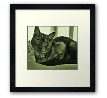 Envy to the cats simplistic life Framed Print