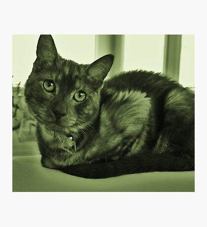 Envy to the cats simplistic life Photographic Print