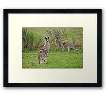 The Kangaroos of Hill End NSW Framed Print