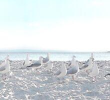 Breakfast flock. by John Medbury (LAZY J Studios)