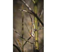 unknown hopper with appendage Photographic Print