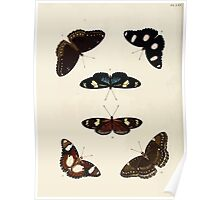 Exotic butterflies of the three parts of the world Pieter Cramer and Caspar Stoll 1782 V1 0292 Poster