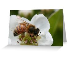 Bee with pollen on the blossom Greeting Card