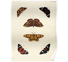 Exotic butterflies of the three parts of the world Pieter Cramer and Caspar Stoll 1782 V3 0136 Poster