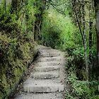Parahaki Scenic Reserve. by Lynne Haselden