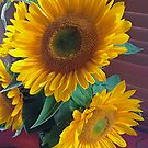 Sunflowers on Red Table by Barbara Wyeth