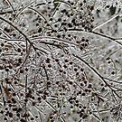 Icy winter  by ANNABEL   S. ALENTON
