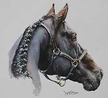 Horse of a different colour. by David McEwen