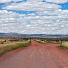 The Willochra Plains by Terry Everson