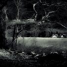 Night Walk by Witch Hollow Farm by Susana Weber