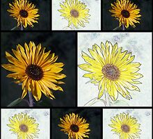 Sunflower Photo and Colored Pencil Collage by Jonice