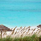 Tropical Tops by Carol Barona