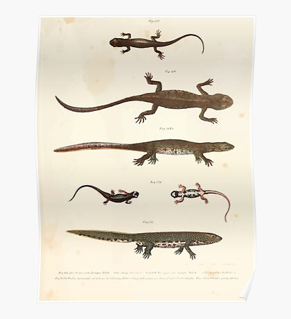 Leopold Joseph Fitzinger 1867 0209 Picture Atlas for popular scientific natural history of vertebrates Poster
