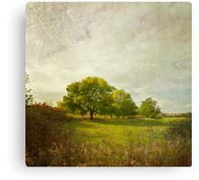 Montpellier Water Meadows Canvas Print