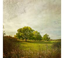 Montpellier Water Meadows Photographic Print
