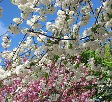 Blue Sky and Beautiful Blossoms by Kathryn Jones