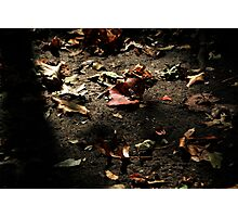 natures litter Photographic Print