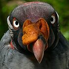 His Royal Highness-King Vulture by hastypudding