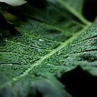 Wet tropical leaf by Martyn Franklin