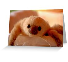 Baby sloth in a nursery of Costa Rica Greeting Card