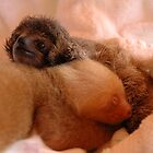 Sloths in a nursery of Costa Rica by Marieseyes