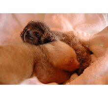 Sloths in a nursery of Costa Rica Photographic Print