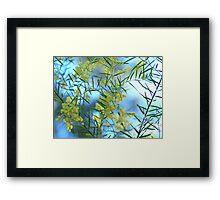 Spring Wattle,Quensland Australia Framed Print