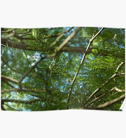 Scene of Green Poster