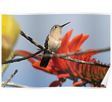 Buffy Hummingbird 2 Poster