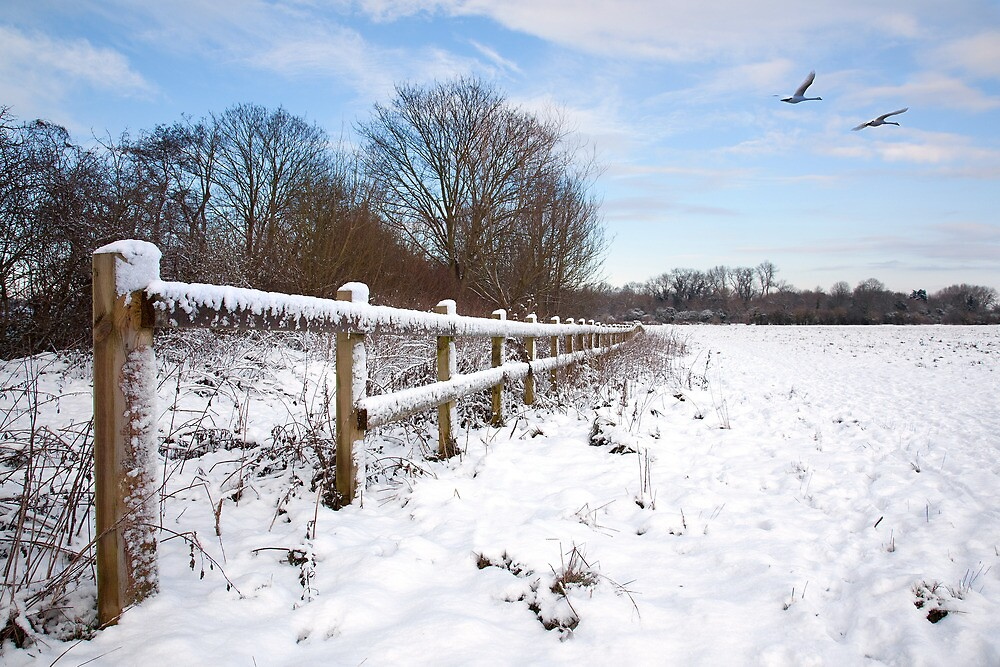 Winter on Desborough Island by Rachael Talibart