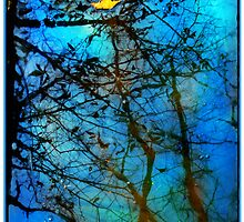 Beautiful mud puddle by signore