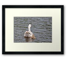 Mum and I: White Gosling and female goose Framed Print