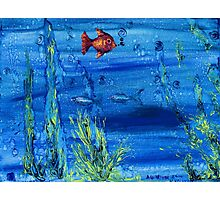 Red fish blue fish Photographic Print