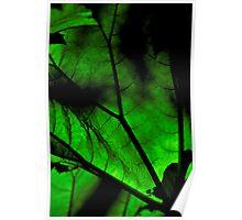 Giant backlit green leaf Poster