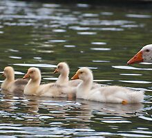 Greenhill Goslings: White geese on Bingley Canal by Ann Miller