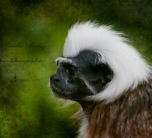 Colubus Monkey  by ©FoxfireGallery / FloorOne Photography
