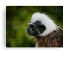 Colubus Monkey  Canvas Print