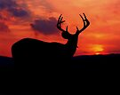 Sunset Buck by Miles Moody