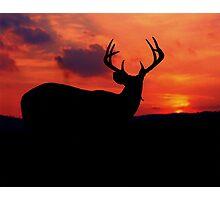 Sunset Buck Photographic Print