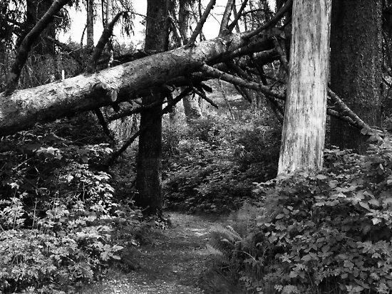 Talk a Walk Under the Tree ~ Black & White by Lucinda Walter