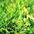Raindrops In The Grass by ilonaa